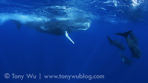 The Sounds of the Sperm Whale - YouTube